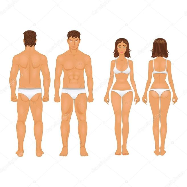 depositphotos_55757207-stock-illustration-healthy-body-type-of-man